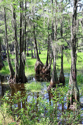 Photograph - Florida Swamp by Carol Groenen