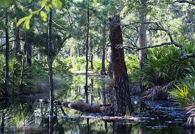 Florida Swamp Art Print by Kenneth Albin