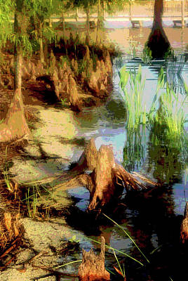 Florida Swamplands Art Print by Rianna Stackhouse