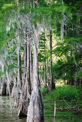 Florida Swamps Art Print by Peter  McIntosh