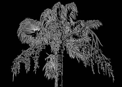 Photograph - Florida Thatch Palm In Black And White by HH Photography of Florida