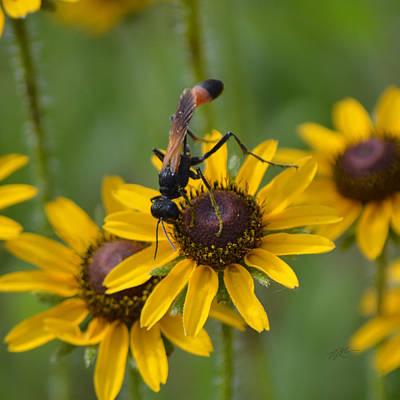 Photograph - Florida Thread-waisted Wasp by rd Erickson