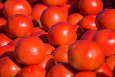 Photograph - Florida Tomatoes by Fran Gallogly