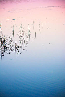 Photograph - Florida Tranquility by Parker Cunningham