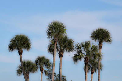 Photograph - Florida Tree Foliage by Deborah  Crew-Johnson
