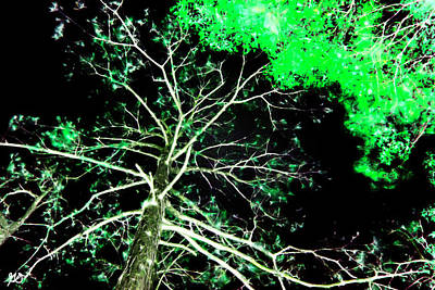 Photograph - Florida Tree Tops by Gina O'Brien