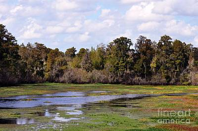 Photograph - Florida Wetlands Landscape by Rose  Hill