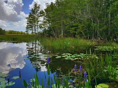 Photograph - Florida Wetlands Reflections by Juan Montalvo