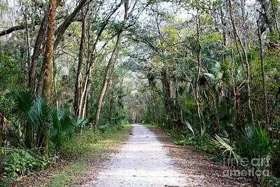 Photograph - Florida Wilderness Walkway by Danielle Groenen