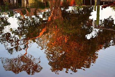 Photograph - Florida Winter Reflection by Florene Welebny