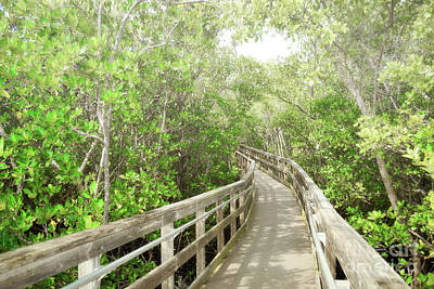 Photograph - Florida Woodland Boardwalk Trail by Andrea Hazel Ihlefeld