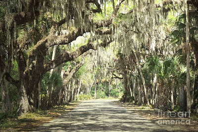 Photograph - Florida Woodland Country Road by Andrea Hazel Ihlefeld