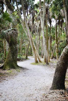Photograph - Florida Woodland Forest Trail Landscape by Andrea Hazel Ihlefeld