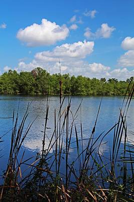 Photograph - Florida's Edge by Michiale Schneider