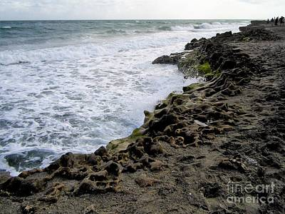 Photograph - Florida's Rocky Coastline by D Hackett