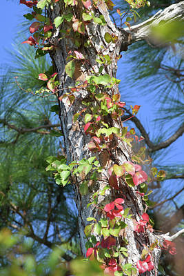 Photograph - Florida's Sort Of Autumn by William Tasker