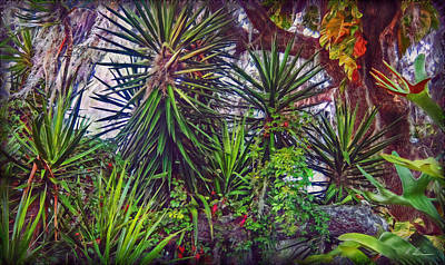 Photograph - Florida's Vegetation by Hanny Heim