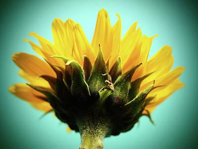 Photograph - Floristic by Tom Druin