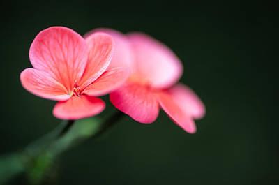 Photograph - Flourish by Tim Nichols
