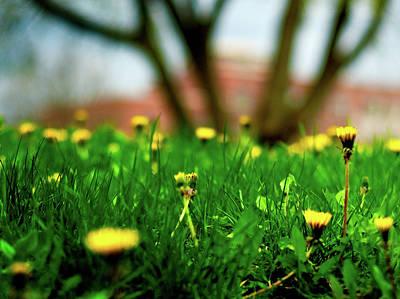 Photograph - Flourish by Venura Herath
