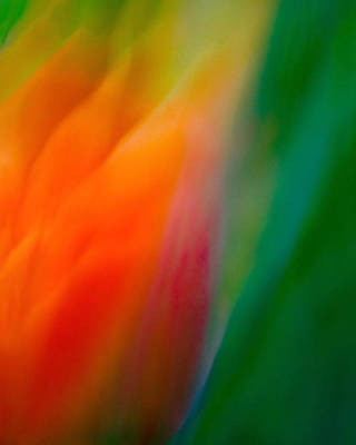 Photograph - Flow by Neil Shapiro