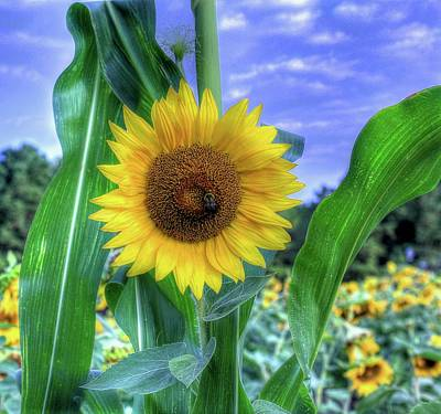 Photograph - Flower # 38 by Albert Fadel