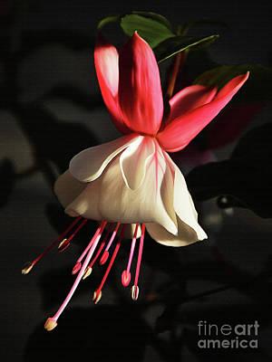 Flower 0021-a Original by Gull G