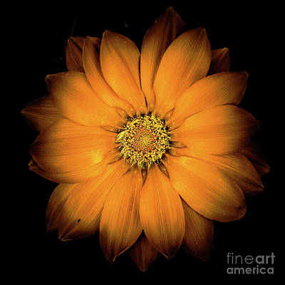 Photograph - Flower 15 by Bruno Spagnolo
