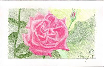 Rod Ismay Drawing - Flower 2 - The Confused Rose by Rod Ismay