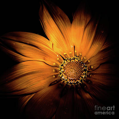 Photograph - Flower 3 by Bruno Spagnolo