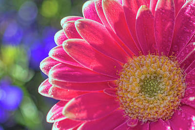 Photograph - Flower 4 by Nadia Sanowar
