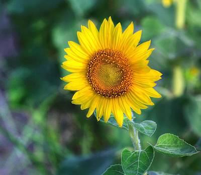 Photograph - Flower #43 by Albert Fadel