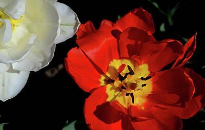 Photograph - Flower 55 by David Gilbert