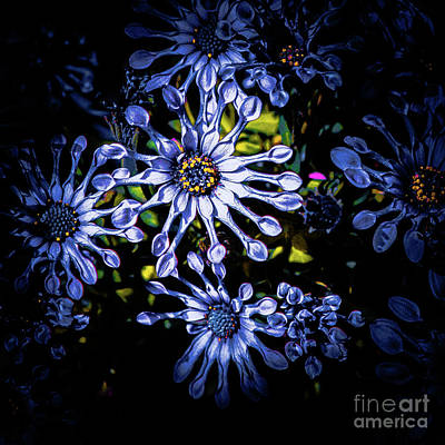 Photograph - Flower 7 by Bruno Spagnolo