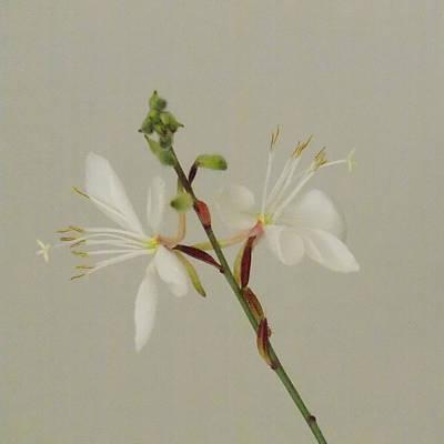 Flower 8-12 Art Print
