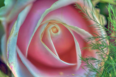 Photograph - Flower 8 by Nadia Sanowar