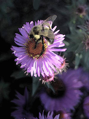 Photograph - Flower And Bee by Dennis Buckman