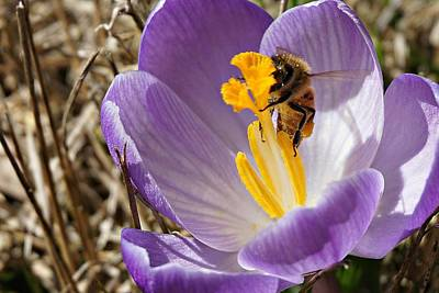 Photograph - Flower And Bee by Fred Bonilla
