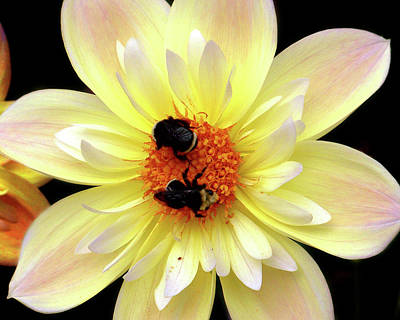 Photograph - Flower And Bees by Anthony Jones