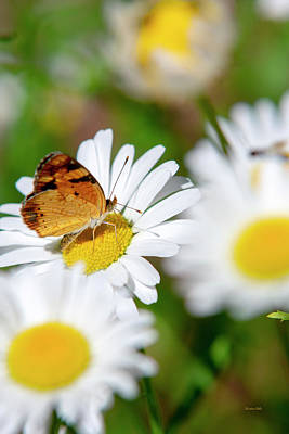 Rollos Photograph - Flower And Butterfly by Christina Rollo