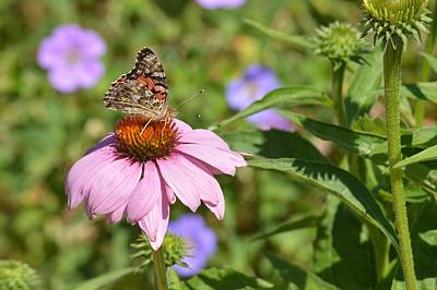Photograph - Flower And Butterfly by Tim Good