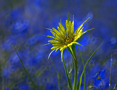 Floral Royalty-Free and Rights-Managed Images - Flower and Flax by Heather Coen