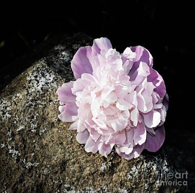 Photograph - Flower And Stone by Zaira Dzhaubaeva
