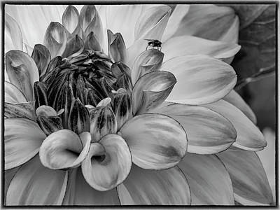 Photograph - Flower And Visitor by Phil Cardamone