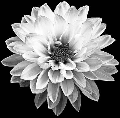 Photograph - Flower by Andrew Kubica