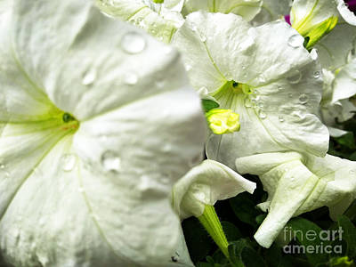 Photograph - Flower Announcement by Robert Knight