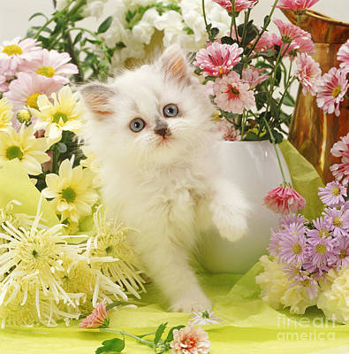 Photograph - Flower Arranging by Warren Photographic