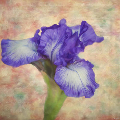 Painting - Flower Art - The Meaning Of An Iris by Jordan Blackstone