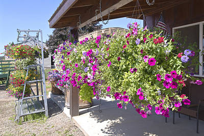 Flower Basket And Racks Displays Outside A Store. Original by Gino Rigucci