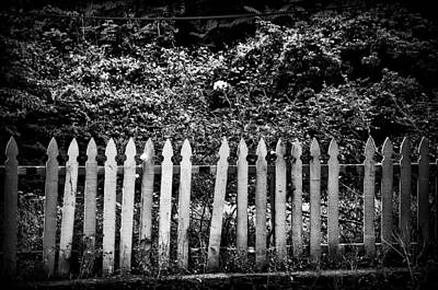 Flower Behind The Fence Print by Bill Cannon